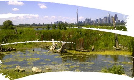 Toronto Waterfront <span>A World-Class Gathering Place for All!</span>